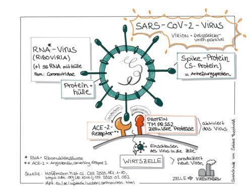 Sketchnotes SARS-CoV-2